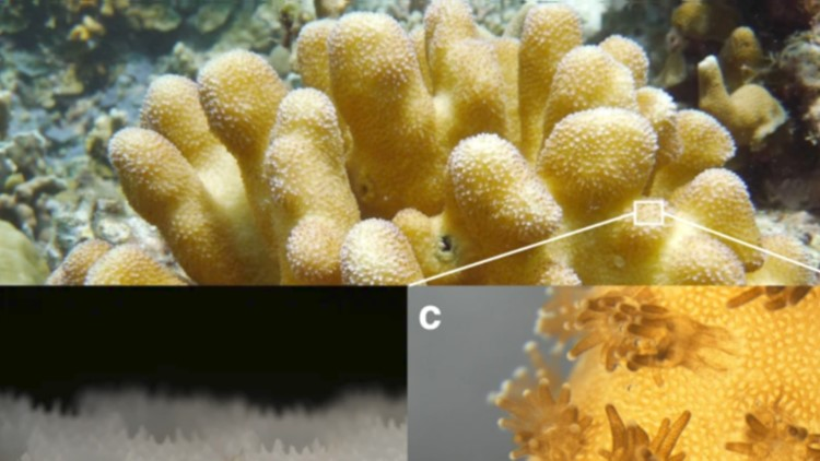3D-Printed Coral Excels at Growing Algae, Could Help Save Coral Reefs