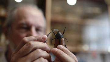 Artist Makes Mini Masks for Insects to Raise Awareness About Saving Them from COVID-19
