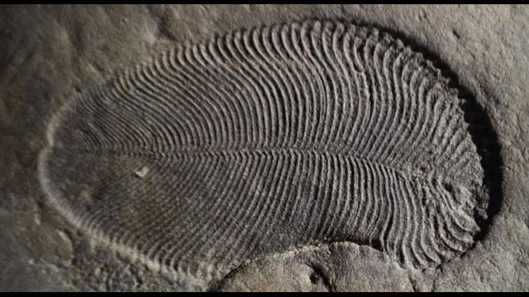 'Fat' traces confirm weird fossils were earliest animals