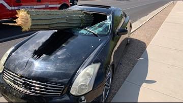 Arizona driver goes to head-to-head with cactus, cactus wins