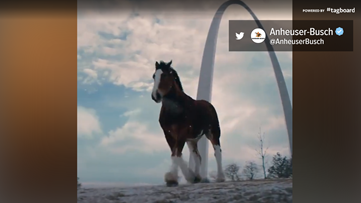 'Together we will run again' | Watch: Clydesdales in Anheuser-Busch ad