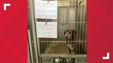 'I just need a 2nd chance' Missouri dog has been waiting 7 years for adoption