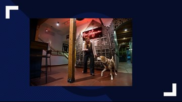 Class teaches dogs brewery manners