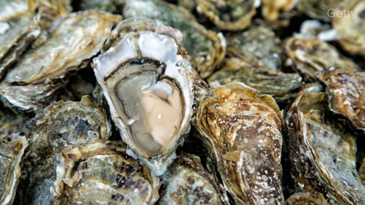 Conservation group creating oyster reef off Phippsburg