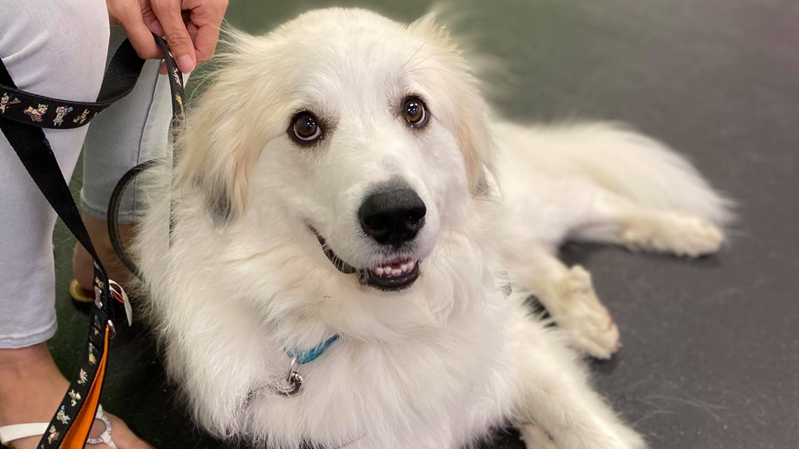 September is 'Service Dog Awareness' month