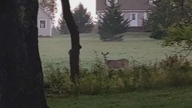 Morning guest for coffee on the deck