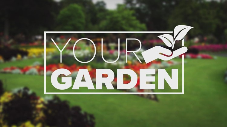 Now is the perfect time to plant grass or overseed your lawn