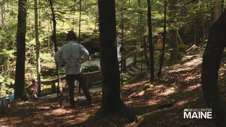 The professor who finds music in the sounds of the forest