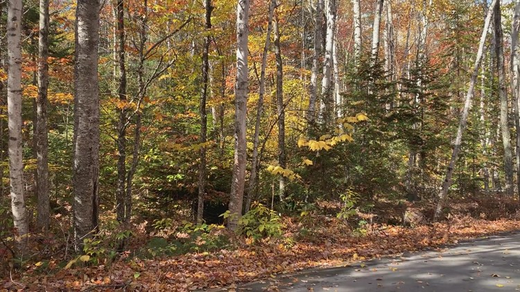 Leaves beginning to fall at Baxter State Park