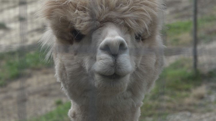Starks couple hopes to turn alpaca farm into wilderness campground