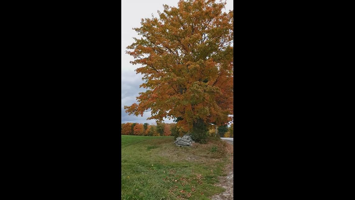 Foliage on Carpenter Road in Poland Maine