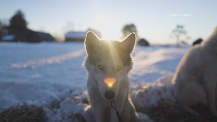 Maine filmmaker debuts 'True North Legends of Dogs and Men' following solo sled dog expedition