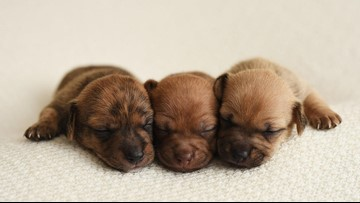 Photographer tries to find foster puppies a home by taking adorable photos