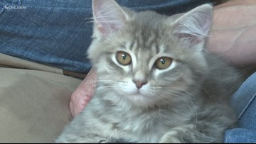 'It's spot on!' North Carolina family successfully clones pet cat