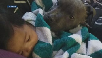 Pit bull rescues baby from fire