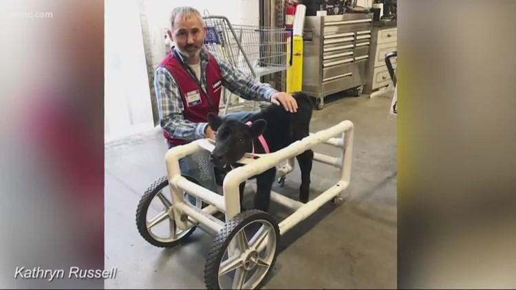 Lowe's employee in Monroe builds custom wheelchair for injured calf