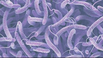 Experts developing vaccine for flesh-eating bacteria