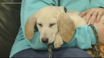 Fetch ME a Home: Joan Jett, the puppy, available for adoption