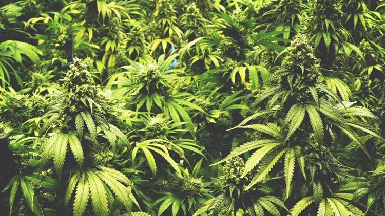 Legislature passes bill to give caregivers, patients a say in medical marijuana regulations