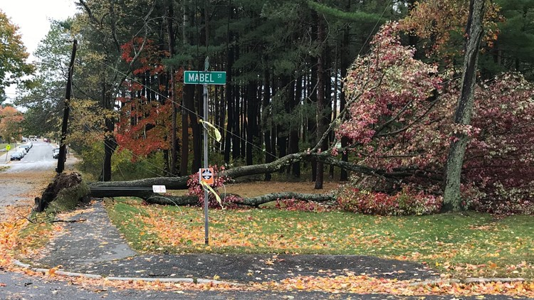 Trees down on Leland St. in Portland