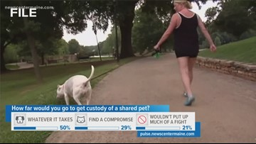 Custody of shared pets in Maine