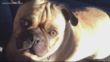 Man charged with Franky the pug's torture, death faces trial