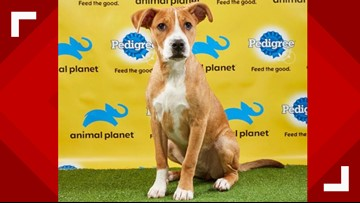 Maine rescue puppy makes Hollywood debut on Animal Planet