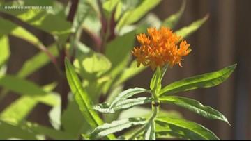 Your Garden: How to attract butterflies