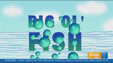 Big Ol' Fish 092318