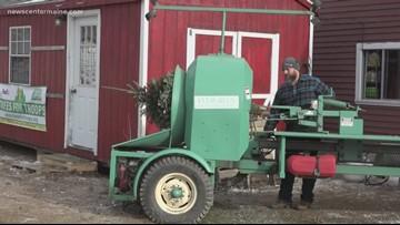 Piper Mountain Christmas Tree farm sending trees to veterans