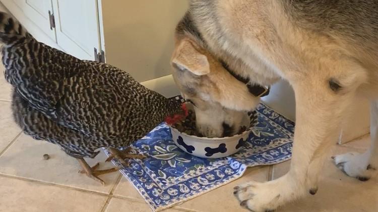 Best Friend Chicken