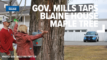 Gov. Mills signals start of sugaring season with maple tree tap