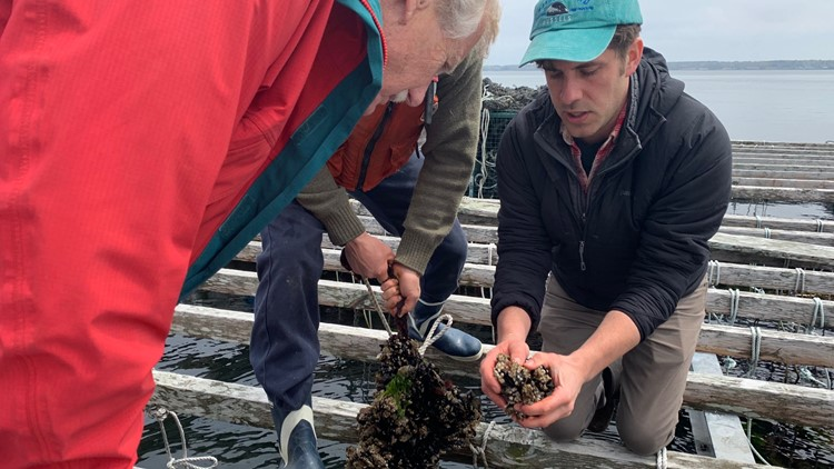 Sen. King visits aquafarm in Casco Bay