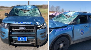 Maine State Police cruiser mangled by moose; department warns of rise in moose crashes as weather warms up