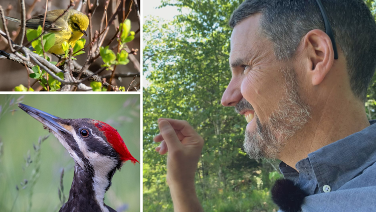 Bird whisperer uses birdsongs to call people back to nature