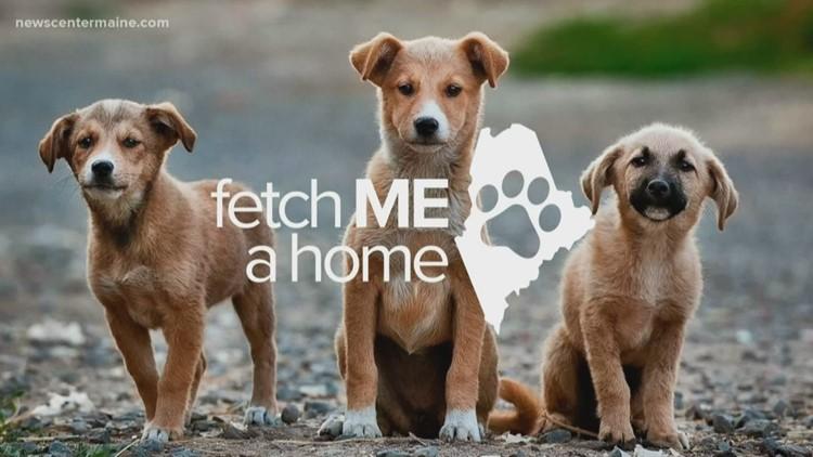 Fetch ME a Home: Bailey