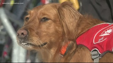 Dog Helps Sunday River Ski Patrol