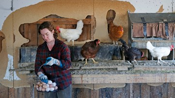 Maine might be the next state to require cage-free eggs