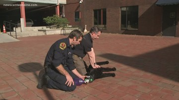 Injured in the line of duty? First responders train to treat police K-9s