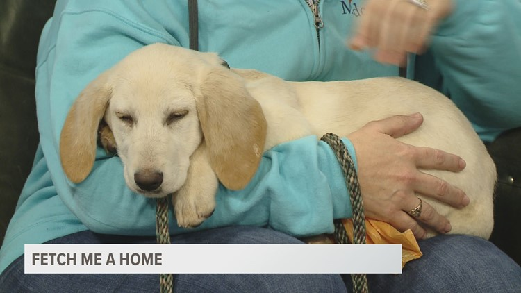 Fetch ME a Home: Joan Jett, the puppy, up for adoption