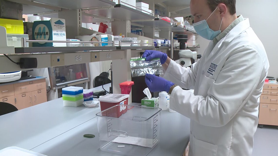 The Maine Tick Lab provides important data for patients following a tick bite
