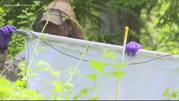Tracking the move of ticks farther north in Maine