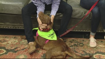 Fetch ME a Home: Shawn the one-year-old lab mix