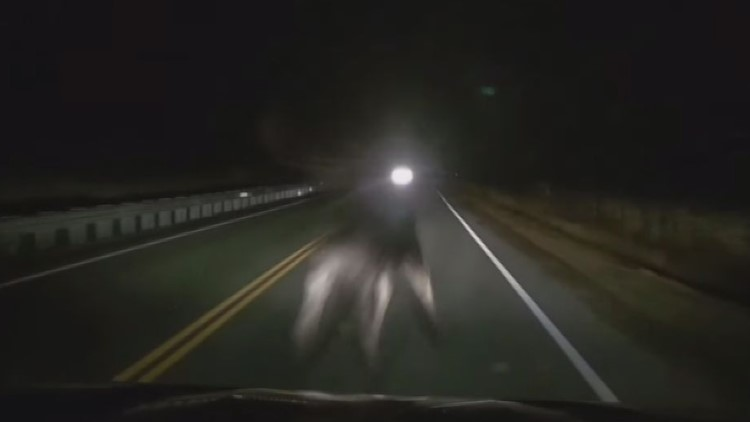 Video shows the moment car hits moose in New Hampshire