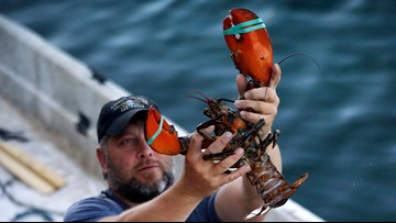 Maine lobster industry will benefit from the China trade deal, Sen. Collins says