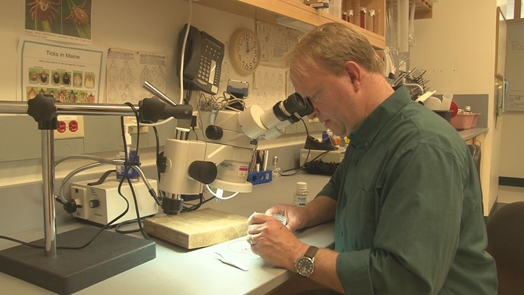 Chuck Lubelczyk studies ticks at Maine Medical Center's Research Institute.