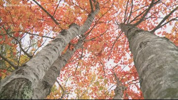 Still time for leaf peeping in coastal Maine areas
