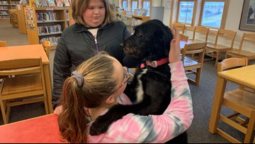 Therapy dog bringing calm and joy to students