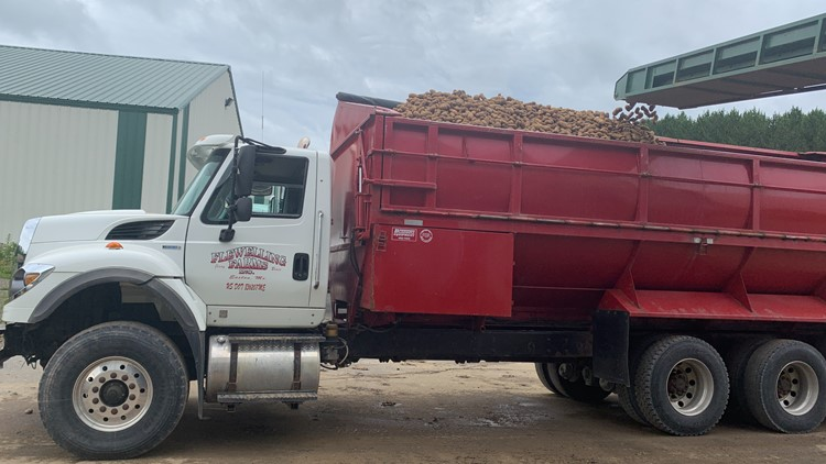Potato growers hope for a bigger, better season after two challenging years