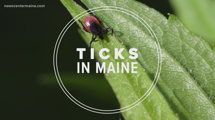 Warmer weather equals ticks